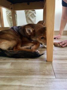 【※犬的な求人募集】 姫路市周辺にお住まいの犬好きの皆さん!集合して頂きたい件