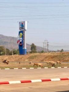 ホームセンターの駐車場に牛がいっぱいいる件